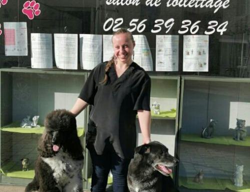 Toilettage chiens et chats – Toilet'Pattes à La Roche-Derrien